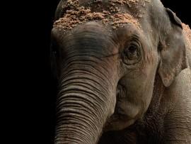 Elefante a colori-ok